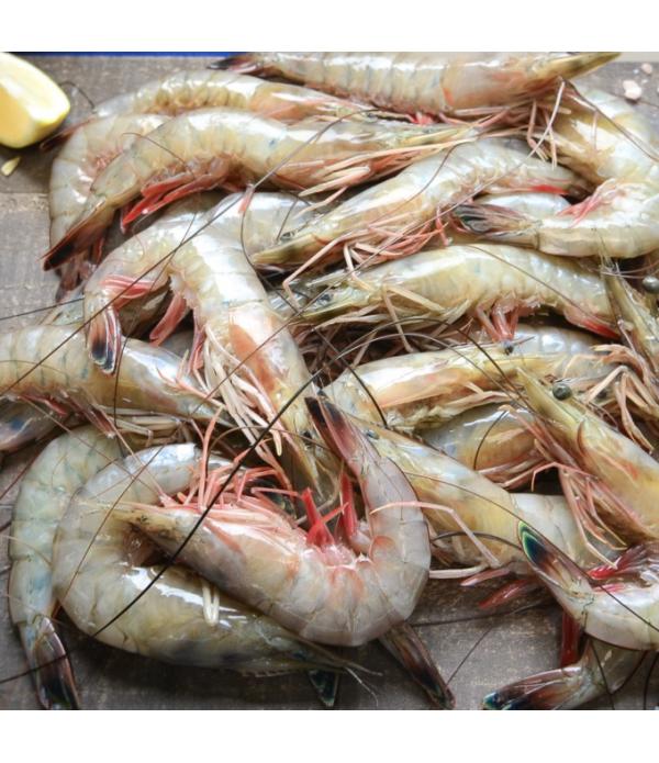 Gulf Shrimp Head-on 13/15 Ct 5lb IQF